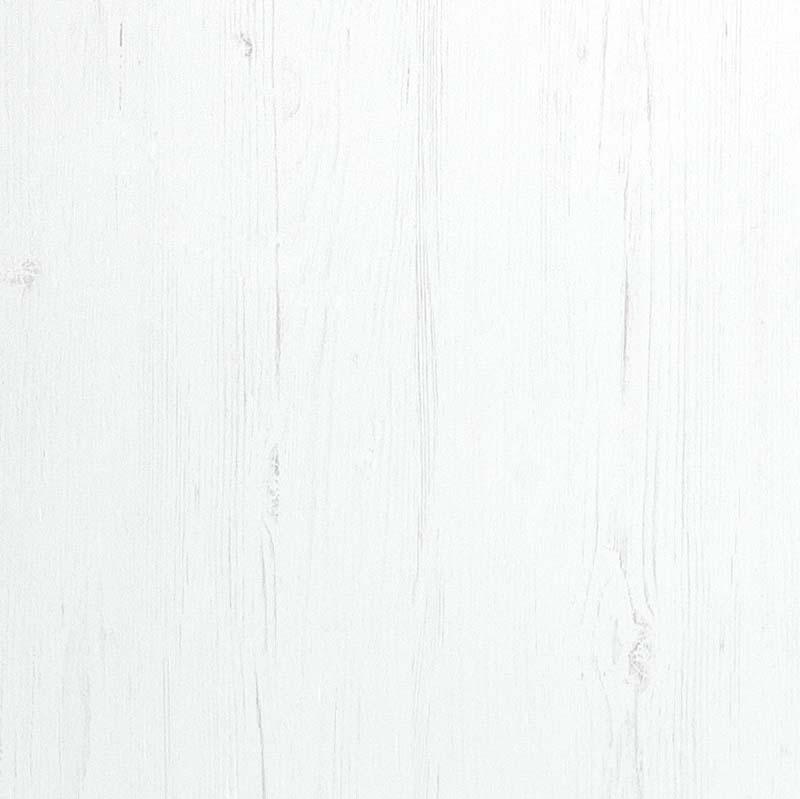 sosna biala probka